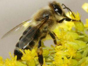 переселення бджіл в альпійський вулик