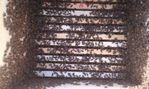 Скільки бджіл у вулику