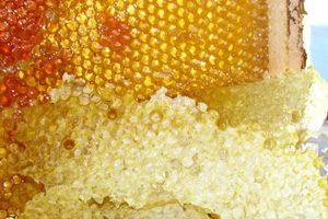 Щот таке бджолиний забрус та як правильно його приймати
