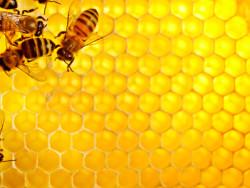 Як бджоли будують стільники