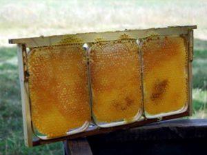стільниковий мед фото
