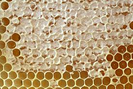 Як застосовувати бджолиний забрус правильно та користь