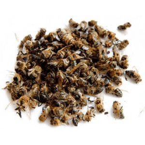 корисні властивості бджолиного підмору