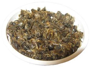 Чим корисний бджолиний підмор, правила прийому
