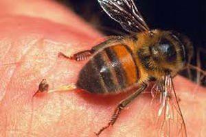Як зняти набряк від укусу бджоли в око: лікування