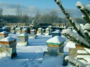 Бджоли в грудні