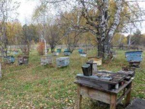 Бджоли в жовтні