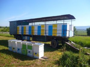 Платформа для перевезення бджіл