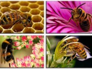 Цікаві факти про бджіл та мед для дітей: коротко