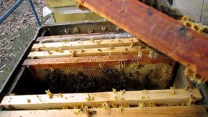 Перший весняний огляд бджіл (бджолосім'ї) відео