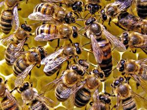 Утримання бджіл по Озерову