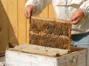 Бджільництво в вересні