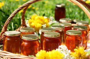 Мед молочай: корисні властивості, лікування