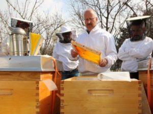 Перший огляд бджіл навесні