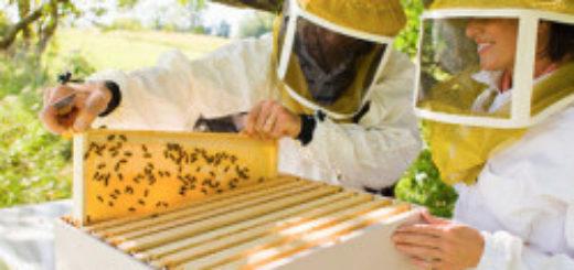 Бджільництво для початківців