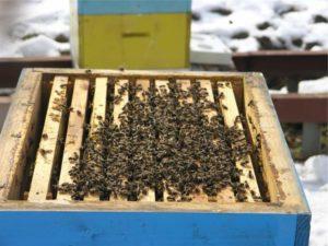 роботи з бджолосім'ями взимку