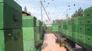 причіп перевозка бджіл