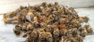 Лікування бджолиним підмором