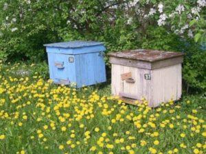 Розподіл бджолосім'ї