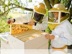 Догляд за бджолами. Прості поради початківцям пасічникам