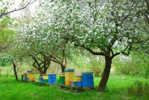 Вибір вулика для бджоляра початківця