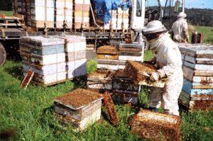 бізнес на бджолах