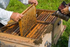 Весняна ревізія бджолосімей