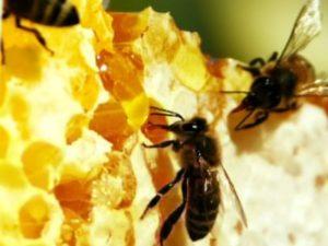 Бджоли в квітні