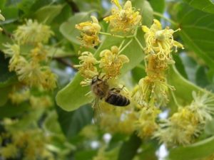 Роботи з бджолами в липні