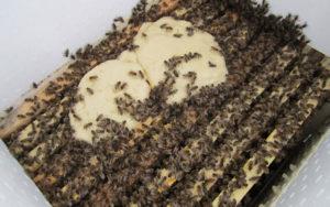 Підкормка бджіл в лютому