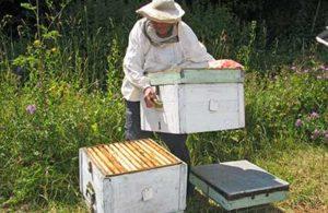 Роботи з бджолами в серпні