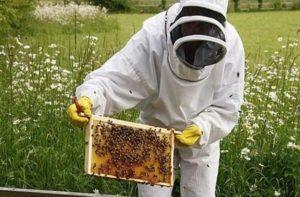 Бджоли в серпні