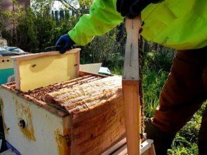 Роботи з бджолами в травні