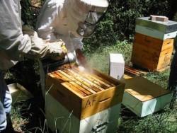 Боротьба з хворобами бджіл восени