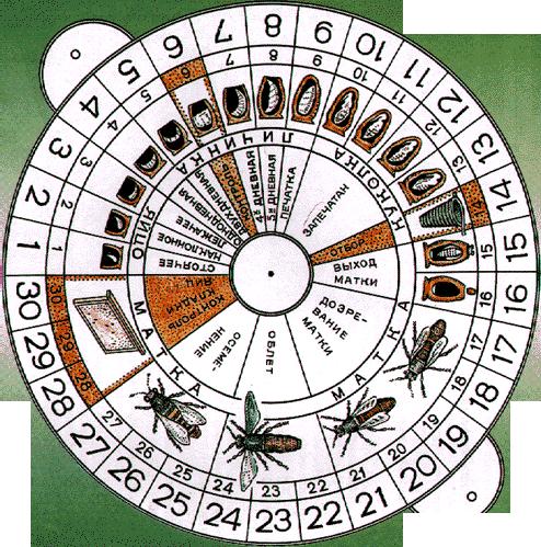 Календар виведення бджолиних маток