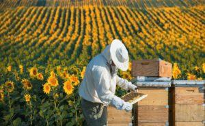 прибуткове бджільництво
