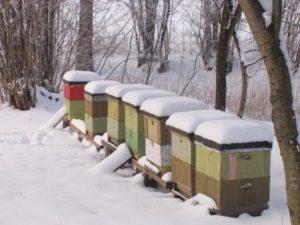 Зимні роботи на пасікі