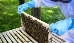 Роботи з бджолами восени