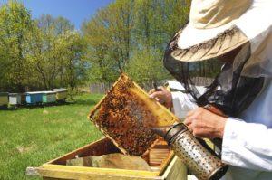 прибутковість бджільництва