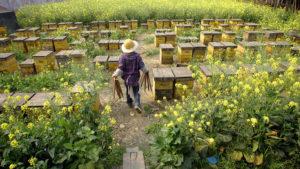 Розведення бджіл як бізнес