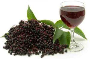 Рецепти приготування вина з бузини