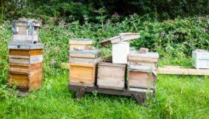 Як можна зробити відводок бджіл
