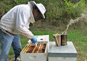 Розведення і утримання бджіл початківцями