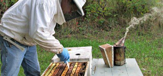 Архивы розведення бджіл відео - 5dec572f2b502