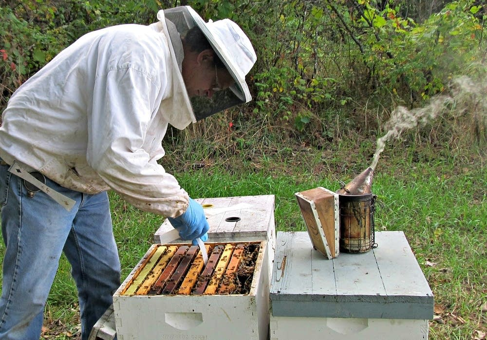 Розведення бджіл для початківців  з чого почати d69d3aad82a7a