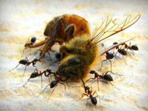 Захист бджіл від ворогів