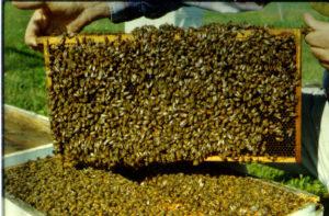 Травневі роботи з бджолами