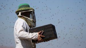 З чого почати утримувати бджіл