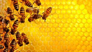 бджоляру початківцю