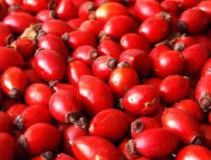 Калорійність плодів шипшини